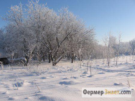 Zašto cut stabala u zimskom