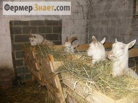 Заготавливаем корма для козы на зиму