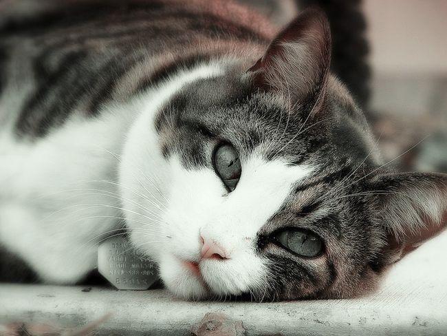 Загуляла кошка что делать в домашних условиях