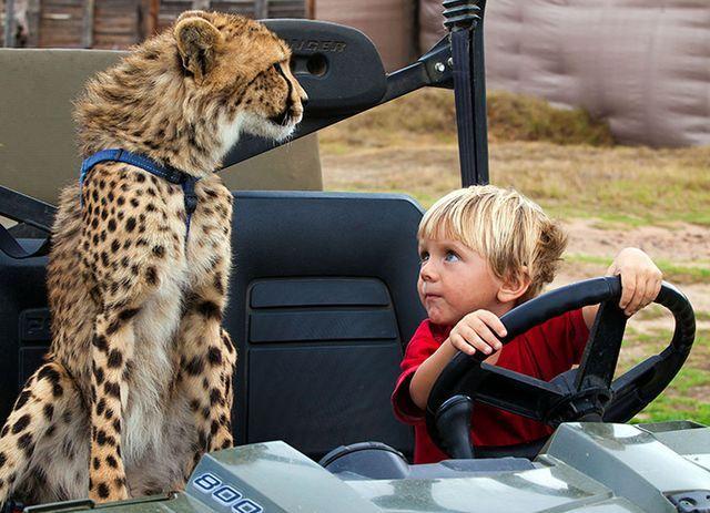 Замечательная дружба детей и гепарда