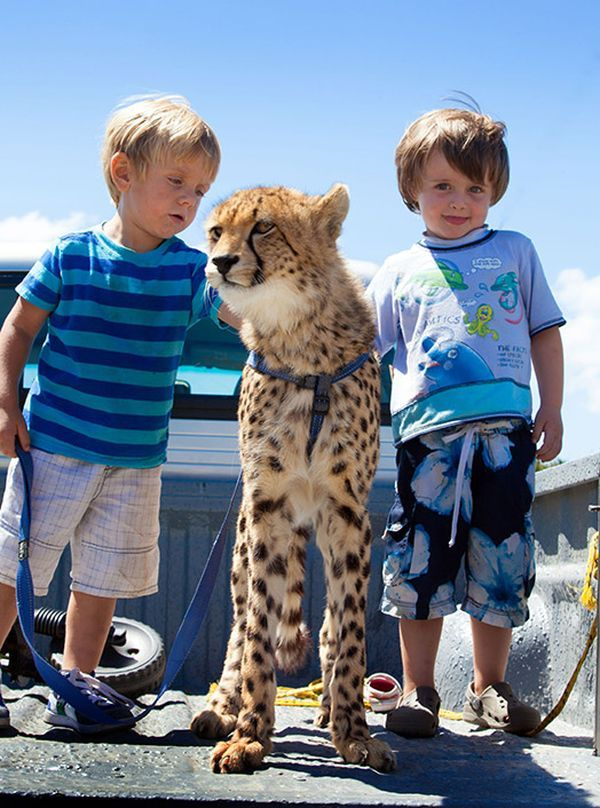 Malan a jeho přítel šel mladý gepard