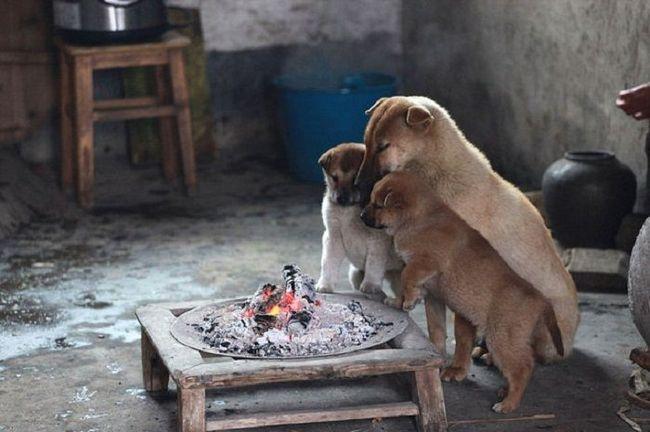 Замерзшие собаки нашли простой способ, чтобы согреться