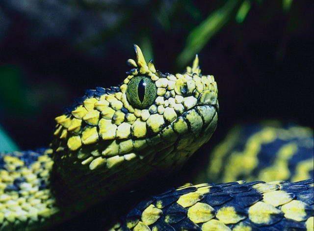 Otrovna zmija brzo skliznula iz boce, ispunjen votke, i bio je ugrizao čovjeka koji je otkrio staklene posude