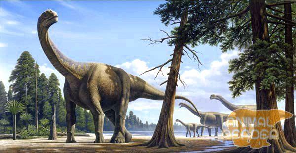 Sauropodi - najveći dinosaur