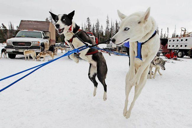 Završetak utrke u sezoni na Dogsled