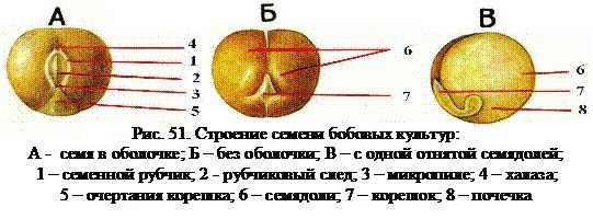 Leguminoase