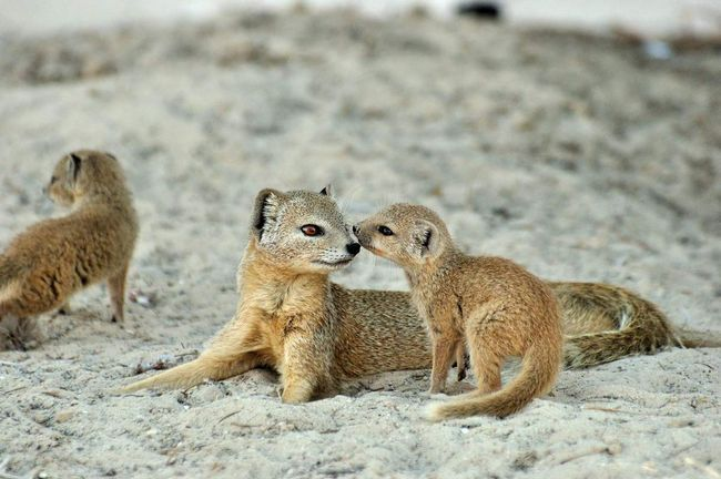 Малыш крутится возле матери.