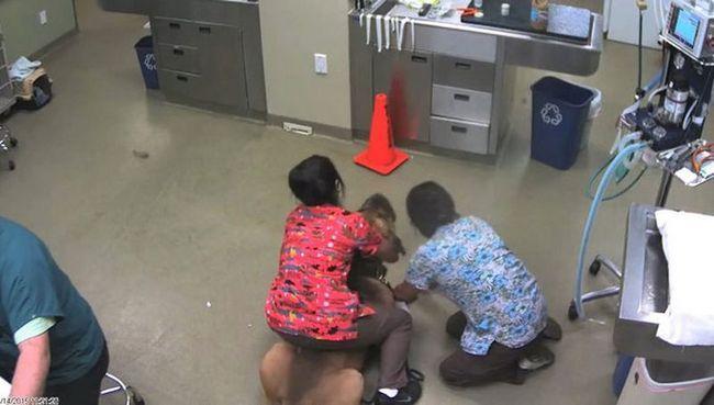 Женщина оседлала собаку, которая не далась ветеринару