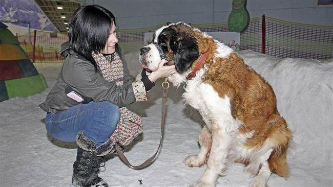 Zadnji dan u životu psa na nadimak Sofiji.