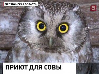 Жительница челябинской области поселила в курятнике мохноногого сыча
