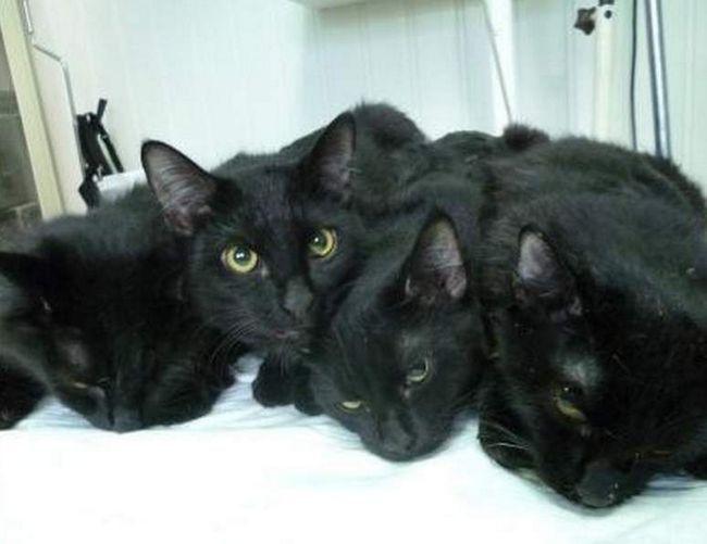 Ulica crne mačke.