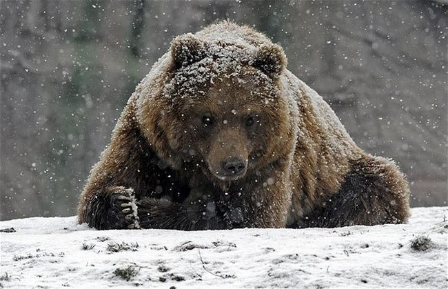 Životinje i prvi snijeg