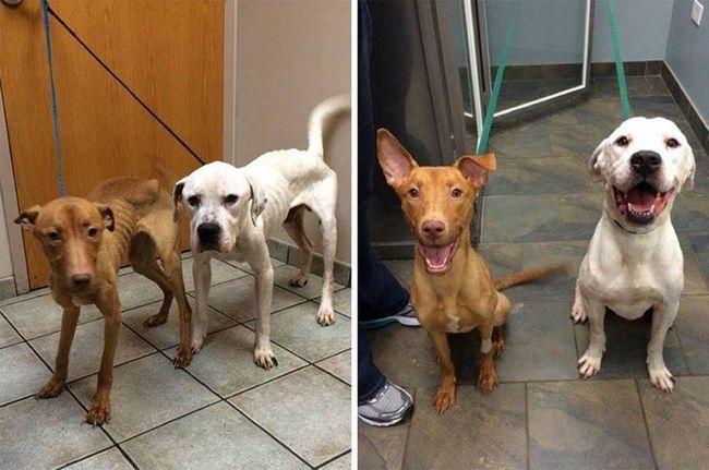 Животные из приюта: спасение двух бродячих псов от истощения