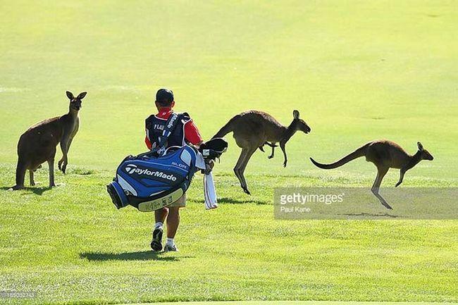 Životinje na sportskom terenu