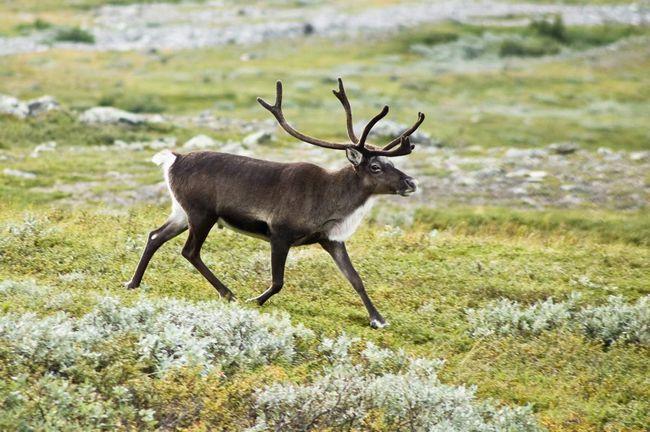 Животный мир северной америки