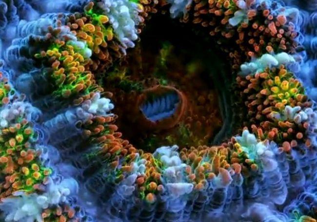 Жизнь кораллов в замедленной съемке