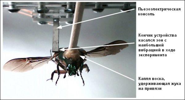 Жуки-киборги будут сами себя обеспечивать электроэнергией