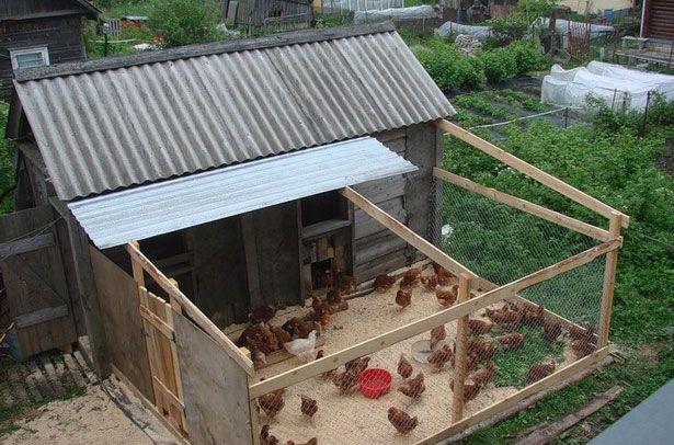 Выгульный двор рядом с курятником