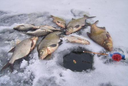 Зимняя поплавочная удочка и ее оснастка