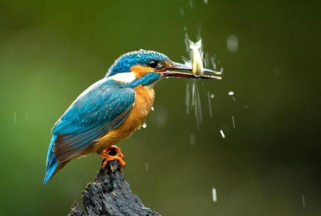 Kingfisher - gospodar podvodni ribolov