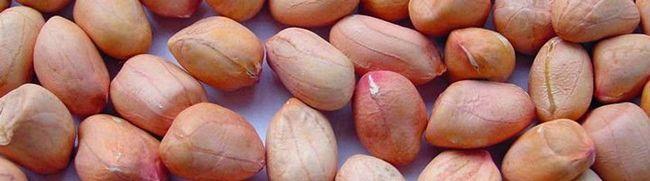Upoznati matice kikiriki - koristi i štete za naše tijelo