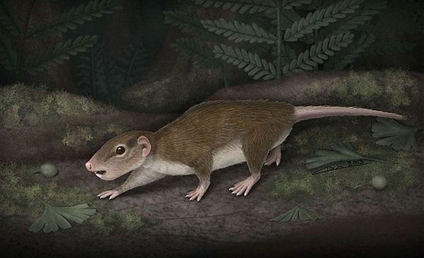 Зверьки, напоминавшие грызунов смогли пережить динозавров